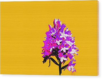 Orange Pyramid Orchid  Wood Print