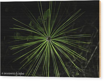 Pyrotechnics Or Pine Needles Wood Print by Stefanie Silva