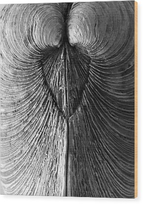 Quahog Closeup No.1 Wood Print by Henry Krauzyk