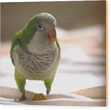 Quaker Parrot Wood Print by Mark Platt