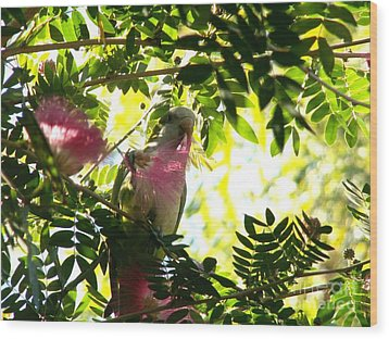 Quaker Parrot With Mimosa Flower Wood Print by Theresa Willingham
