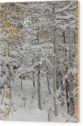Quakies In Early Winter Wood Print by DeeLon Merritt