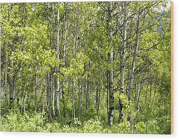 Quaking Aspens 2 Wood Print by Cynthia Powell