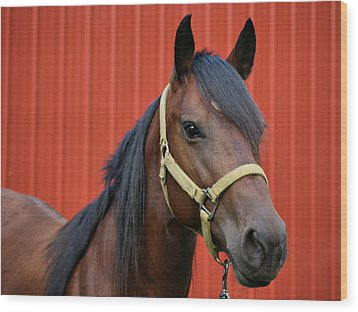 Quarter Horse Wood Print by Sandy Keeton