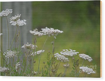 Queen Anne Lace Wildflowers Wood Print by Maria Urso