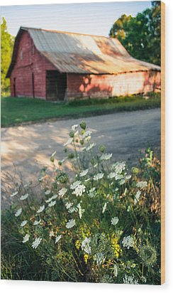 Queen Anne's Lace By The Barn Wood Print by Parker Cunningham