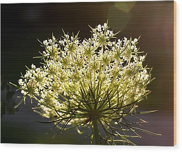 Queen Anne's Lace Wood Print by Diane Merkle