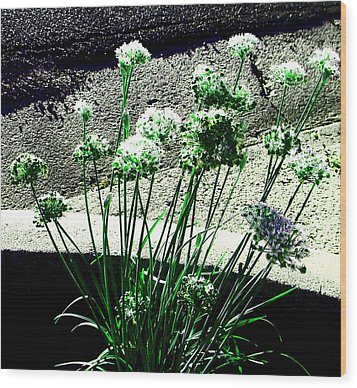 Wood Print featuring the photograph Queen Anne's Lace by Lenore Senior
