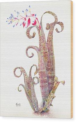 Quesnelia Marmorata Tim Plowman Wood Print