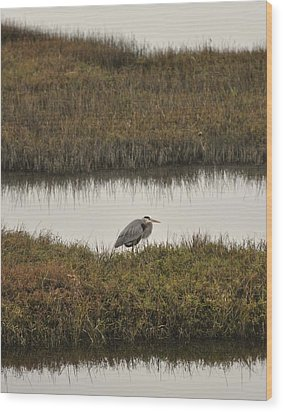 Quiet Heron Wood Print