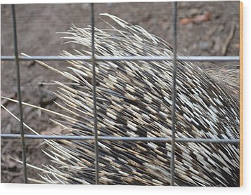 Quills Of An African Porcupine Wood Print by Linda Geiger