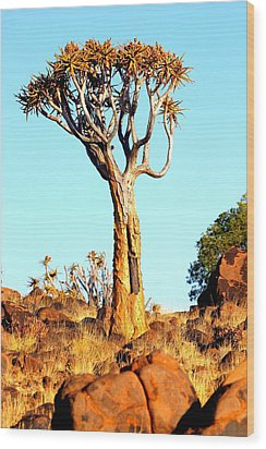 Wood Print featuring the photograph Quiver Tree by Riana Van Staden