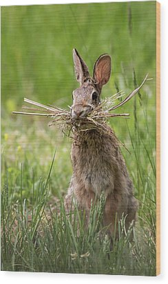 Rabbit Collector  Wood Print by Terry DeLuco