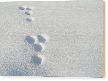 Rabbit Footprints In The Snow 2 Wood Print by Jack Dagley