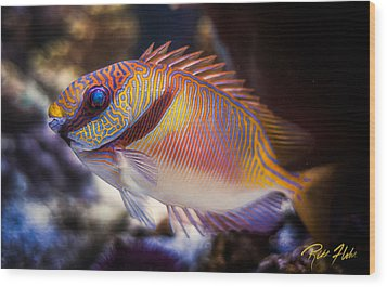Rabbitfish Wood Print by Rikk Flohr