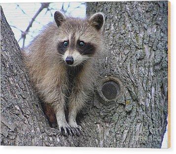 Raccoon Lookout Wood Print