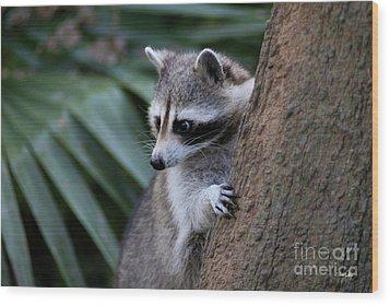 Raccoon Wood Print by Scott Pellegrin