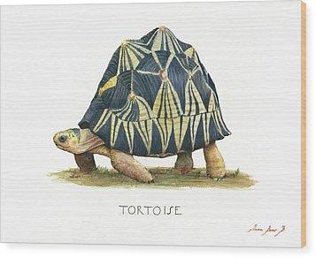 Radiated Tortoise  Wood Print