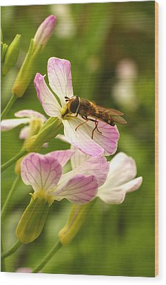 Radish Flower And The Fly Wood Print by Steve Augustin
