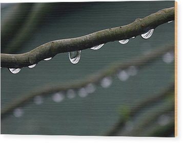 Rain Branch Wood Print by Photography by Gordana Adamovic Mladenovic