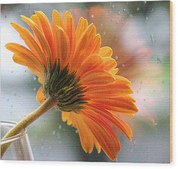 Rain Drops At My Window Wood Print by Angela Davies