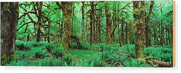 Rain Forest, Olympic National Park Wood Print by Panoramic Images