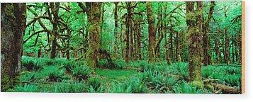 Rain Forest, Olympic National Park Wood Print
