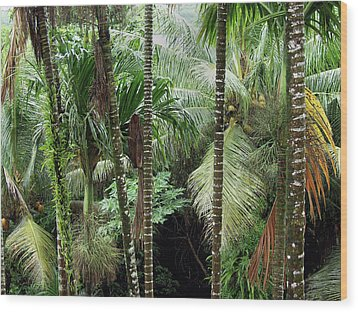 Rain Forest Palau Wood Print by Thomas Walsh