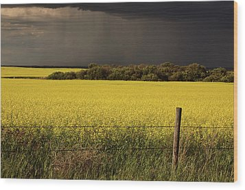 Rain Front Approaching Saskatchewan Canola Crop Wood Print by Mark Duffy
