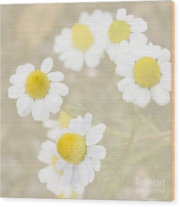 Rain-kissed Chamomile Wood Print