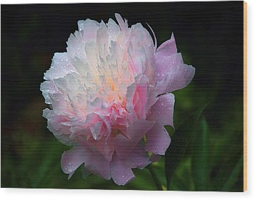 Wood Print featuring the photograph Rain-kissed Peony by Byron Varvarigos