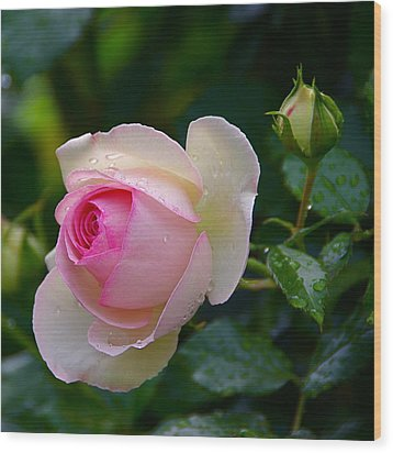 Wood Print featuring the photograph Rain-kissed Rose by Byron Varvarigos