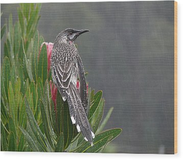 Rainbird Wood Print