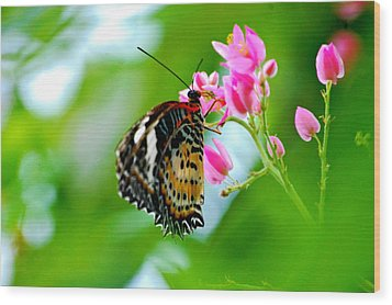 Wood Print featuring the photograph Rainbow Butterfly by Peggy Franz