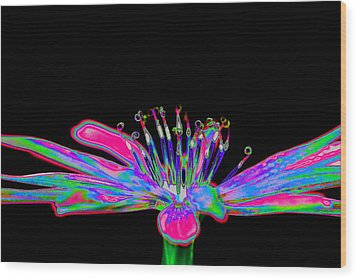 Rainbow Chicory Wood Print