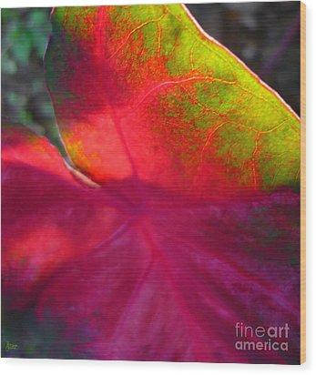 Rainbow Coleus 2 Wood Print by Jeff Breiman