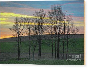 Rainbow Color Tree Horizon Wood Print