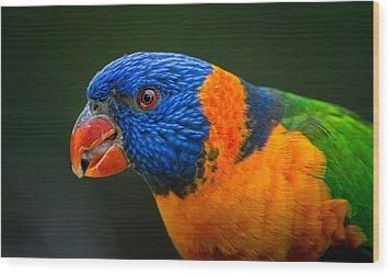 Rainbow Lorikeet Wood Print by Racheal  Christian