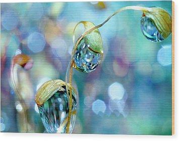 Rainbow Moss Drops Wood Print