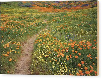 Wood Print featuring the photograph Rainbow Of Wildflowers Bloom Near Diamond Lake In California by Jetson Nguyen