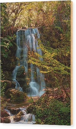 Wood Print featuring the photograph Rainbow Springs Waterfall by Louis Ferreira