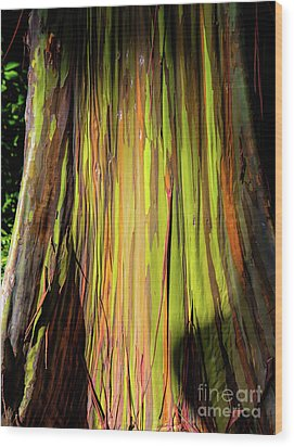 Rainbow Tree Wood Print by Jon Burch Photography