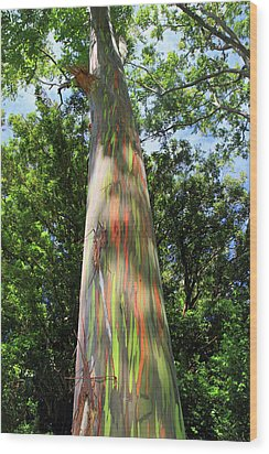 Rainbow Tree Wood Print by Pierre Leclerc Photography