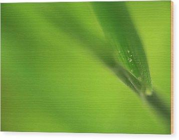 Raindrop On Grass Wood Print