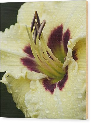 Raindrops On A Petal Wood Print by Tiffany Erdman