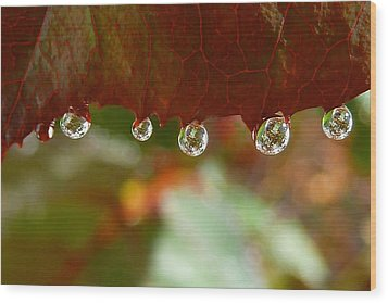 Raindrops On A Red Leaf Wood Print by Patricia Strand
