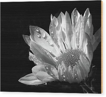 Raindrops On Daisy Black And White Wood Print by Jennie Marie Schell