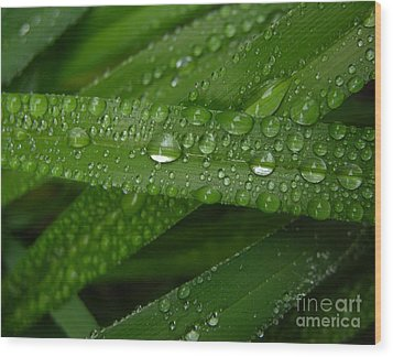 Raindrops On Green Leaves Wood Print by Carol Groenen