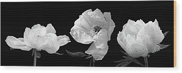 Raindrops On Peonies Black And White Panoramic Wood Print by Gill Billington