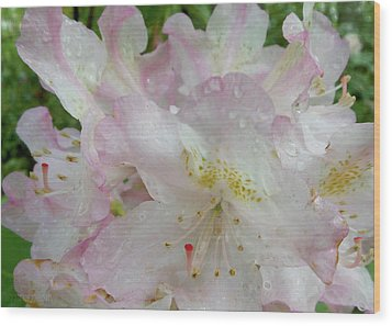 Raindrops On Rhododendron Wood Print